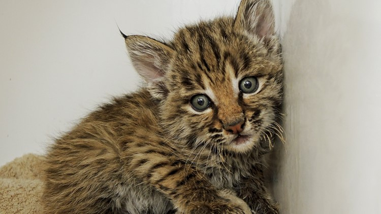 State 48's furry residents: Keeping wild animals safe