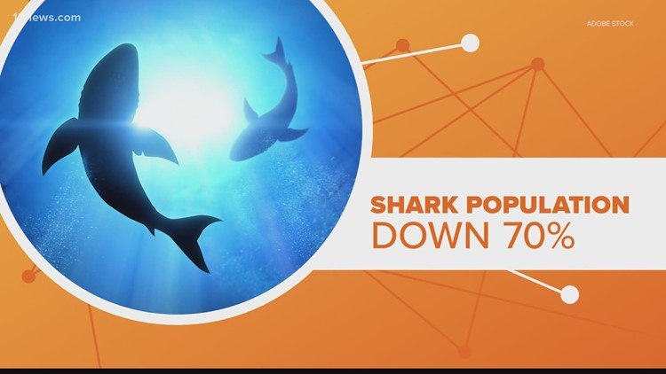 Connect the Dots: What is up with the current shark population?