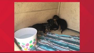 11-week-old puppies found inside duffle bag thrown away in Phoenix dumpster