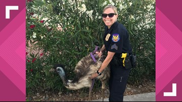 Phoenix PD shares 'emu-sing story' of officers rescuing pet emu