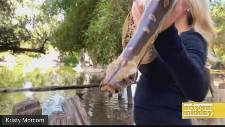 Going Wild for Disney's Jungle Cruise
