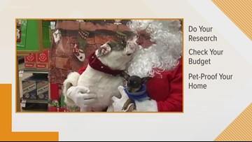 'Santa Paws' delivery and the do's and don'ts of pet giving