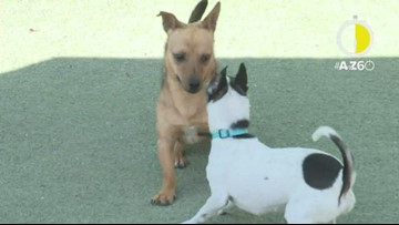 AtoZ60: Find a furry friend at Foothills Animal Rescue