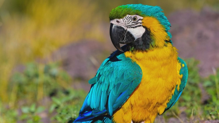 Flower, a 4-year-old Macaw
