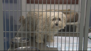 New Year's Eve tips to keep pets safe and out of the shelters
