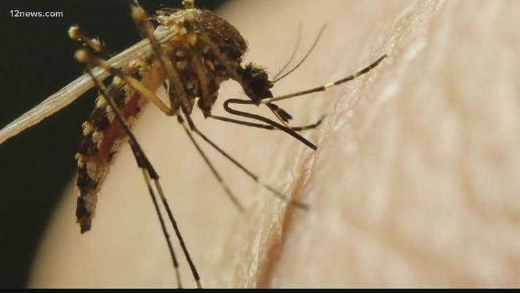 Arizona entre los estados con más casos del virus del Nilo occidental, dicen doctores