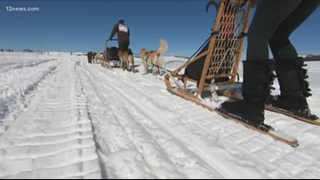 Everywhere A to Z: It's great to be a musher and a sled dog in the White Mountains!