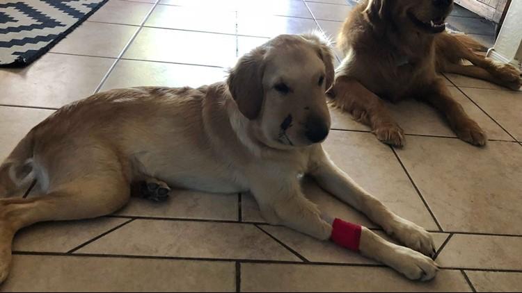 Todd is recovering. (Photo: Paula Godwin)