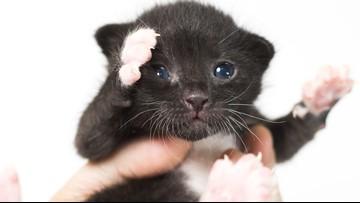 Kitten left for dead in trash bag on side of the road up for adoption in Scottsdale