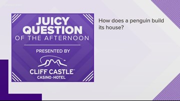 Juicy Question: How does a penguin build its house?