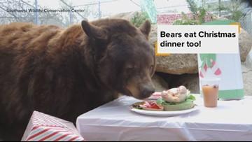 Black bears at Scottsdale conservation center enjoy a Christmas feast