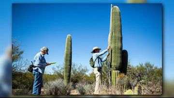 Will Arizona's saguaros survive climate change and drought?