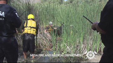 Mesa Fire Department rescues horse stuck in mud in the Salt River