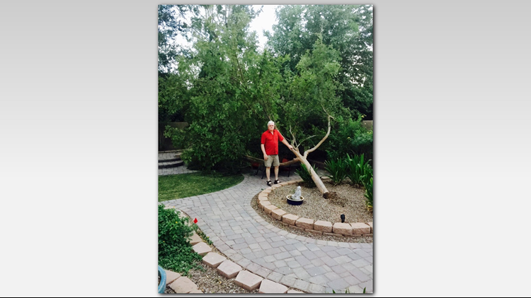 The tree in Cathy Beard-Dipenbrock's backyard in Chandler was blown over by a large wind gust Friday, July 7, 2017.