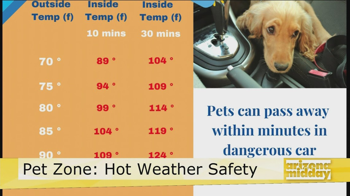 Hot Weather Tips for Your Pets