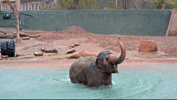 Beloved Asian elephant 'Reba' dies at Phoenix Zoo
