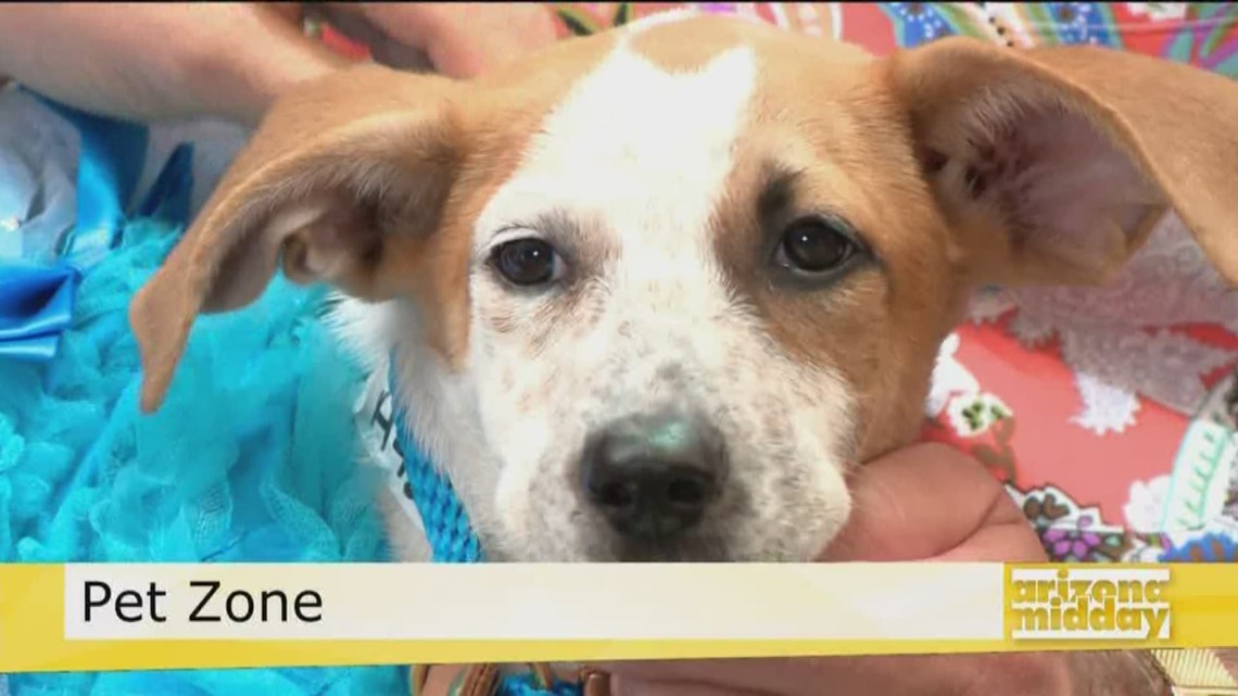 Pet Zone: Adopt A Pet This Weekend!