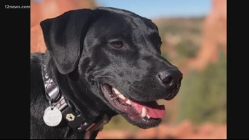 Dog that went missing after its owners were involved in a deadly crash in northern Arizona found safe