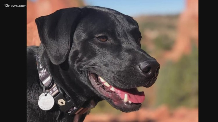 Family searching for dog that went missing after serious car accident in northern Arizona