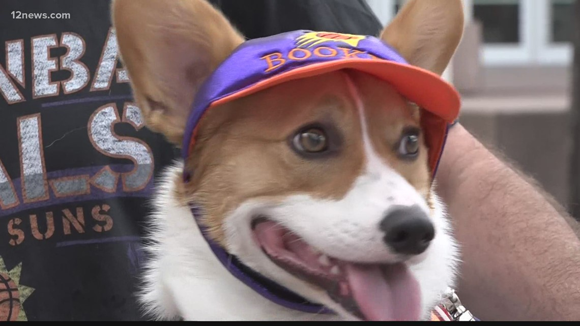 Say hi to Bacon Booker, the Suns' biggest four-legged fan