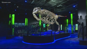 T-rex exhibit comes to Arizona Science Center