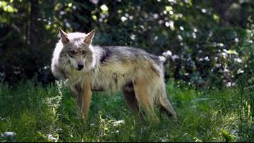 President Trump overhauling enforcement of Endangered Species Act