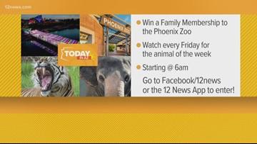 Phoenix Zoo animal of the week