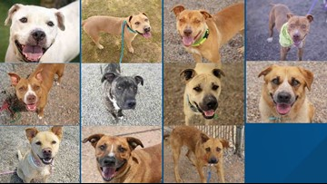 11 dogs rescued after MCACC says they might be euthanized