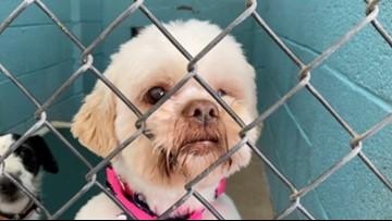 House bill seeks to make puppy mills unprofitable in Arizona