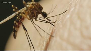107 personas infectadas y 7 muertes a causa del virus del Nilo Occidental en el condado Maricopa en lo que va del año
