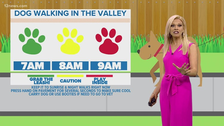 How to keep your dog safe in extreme heat during National Dog Day