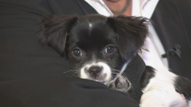 'Cholla Charlie' the pup recovers from cactus injury; has new home, family