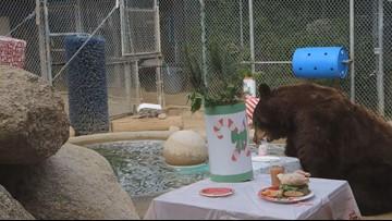 Bears enjoy Christmas dinner at Southwest Wildlife