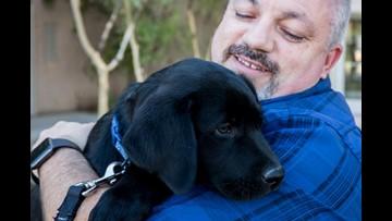 ASU police trauma dog will comfort crime victims