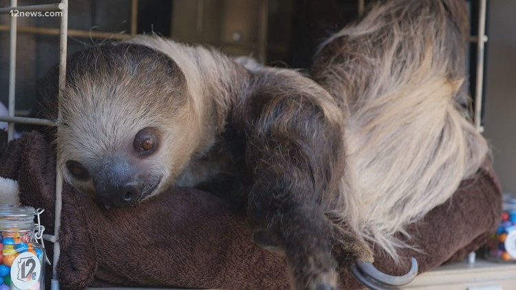 Phoenix Zoo offering personalized messages from sloth for Valentine's Day