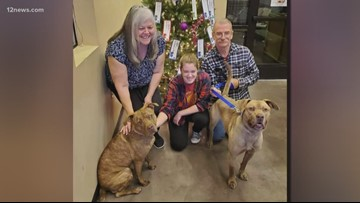 Dog that spent 363 days in Phoenix shelter finds forever home