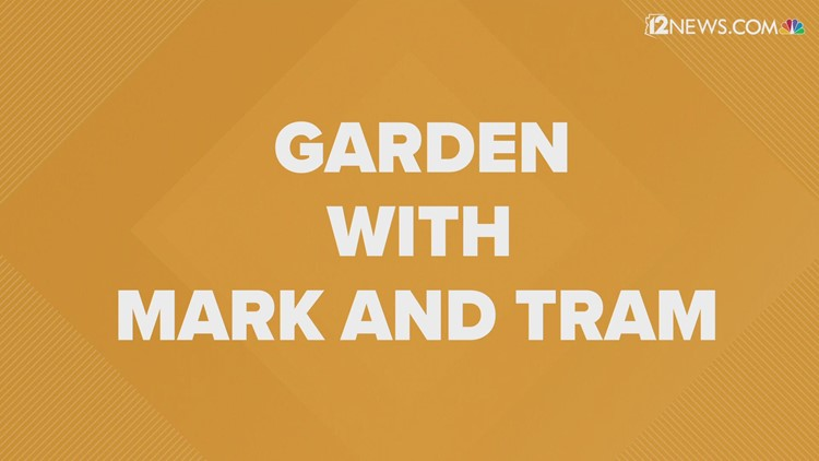 New to gardening? Here are some tips to help you get growing.