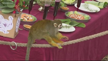 The Phoenix Zoo prepares a feast for the beasts ahead of Thanksgiving
