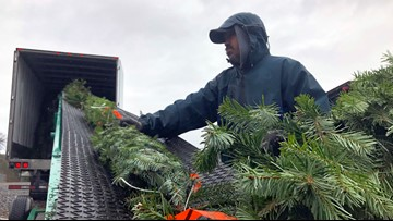 Christmas tree prices remain high amid low supply