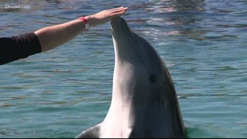 Dolphins from Dolphinaris Arizona moved to sea sanctuary in Virgin Islands