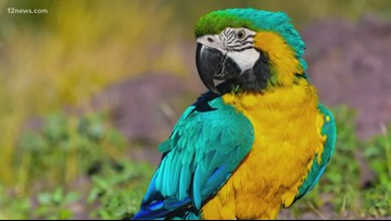 Missing free-flying macaw has Mesa family worried
