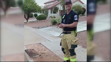 Mesa firefighters rescue 2 baby javelinas from storm drain