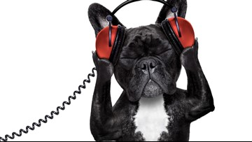 Spotify will now make a playlist for your pet