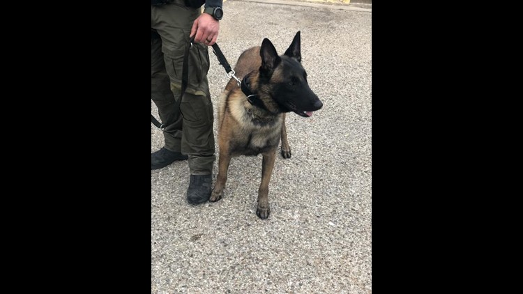 New K9 Kolt takes over for Lobos in Fayette County