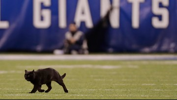Dallas Cowboys name Black Cat a starter against Minnesota Vikings