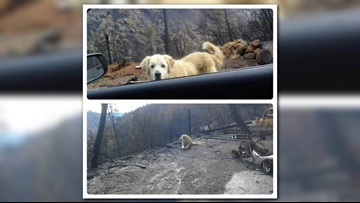 Dog waited weeks at the site of burned down camp fire home for family to return