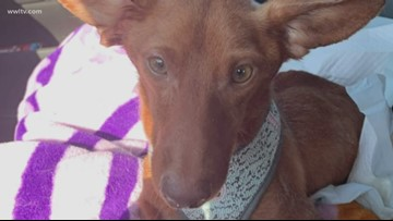 Lousiana mother, daughter arrested after dog found with legs cut off
