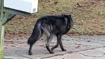 What is it? Dog euthanized after biting boy near Georgia bus stop